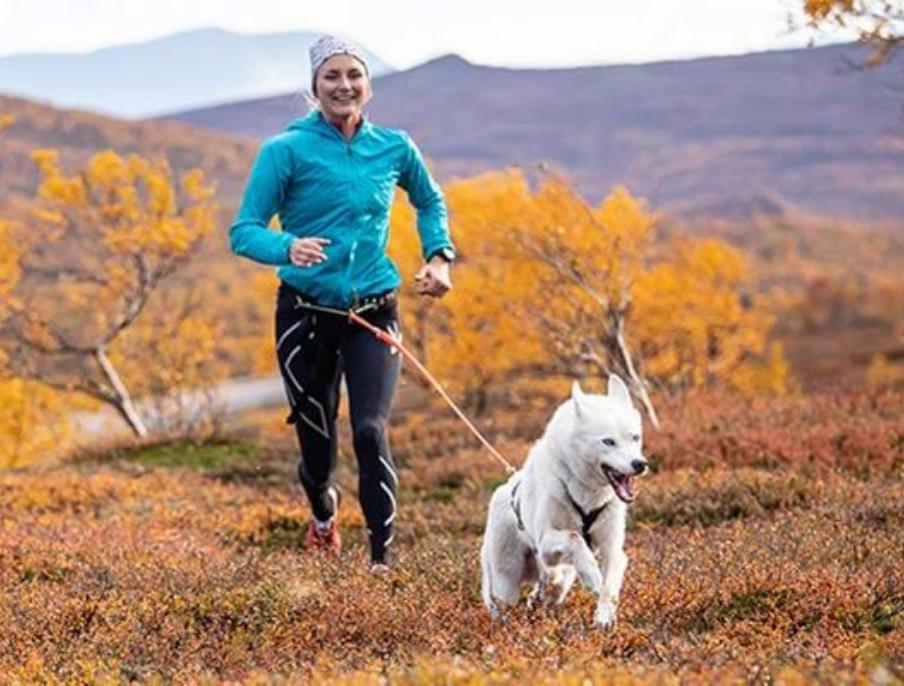 Das Interesse für Lauftraining mit Hund im Canicross-Geschirr wächst