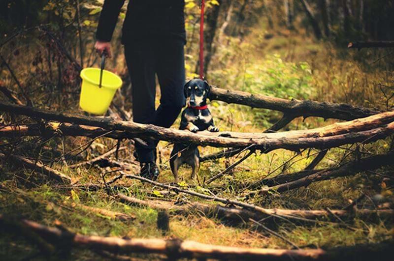 Beschäftige Deinen Hund