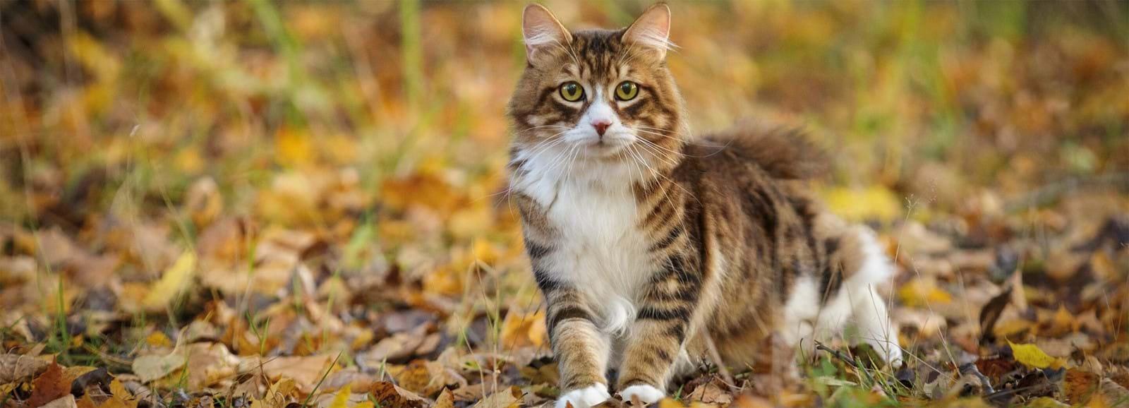 Die Entwicklung der Katze