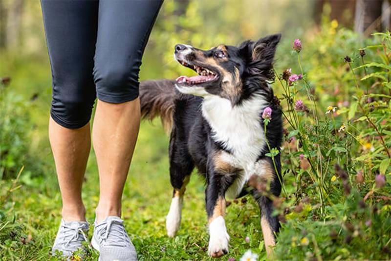 Verbessern sie die Interaktion mit ihrem Hund mithilfe von Aktivitäten