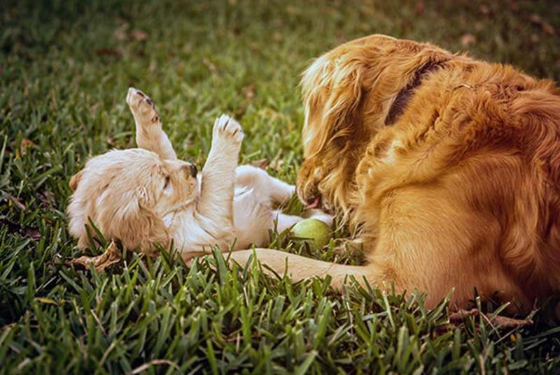 Die Entwicklung des Hundes vom Welpen zum erwachsenen Hund