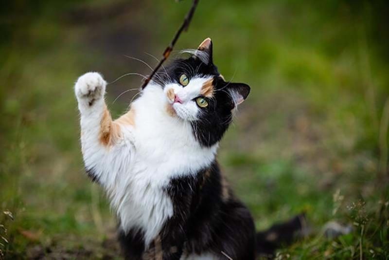 Kann man eine Katze oder ein Kitten trainieren?