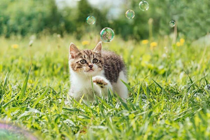 Beschäftige Deine Katze