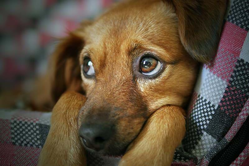 """Fürchtet sich der Hund plötzlich vor alltäglichen Dingen? Vermutlich hat er die """"Spooky Periods"""" erreicht"""