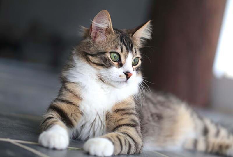 Hat Deine Katze den richtigen Körperfettanteil?