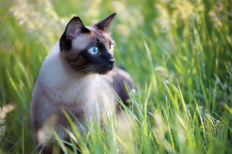 Zdrowie kota