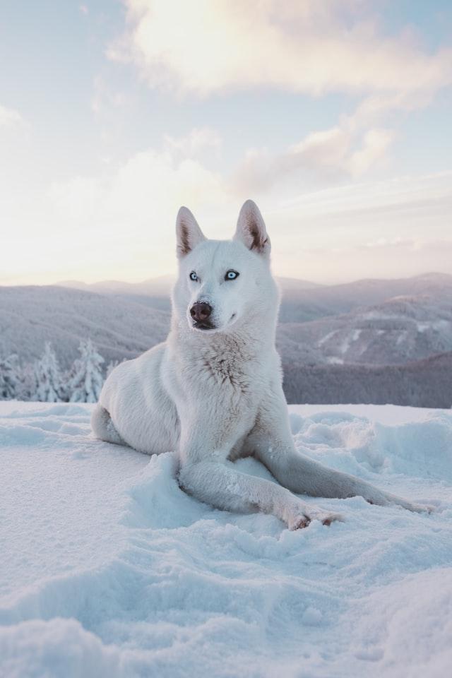 Malin och Lars prepare for the sled dog season.