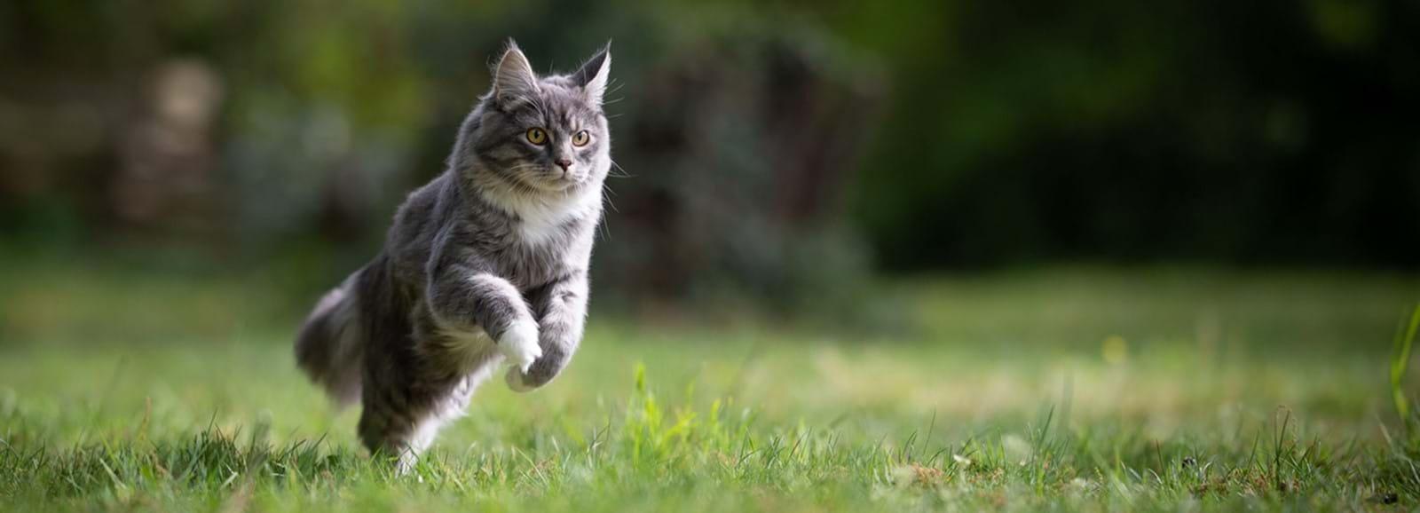 Aktivera katten