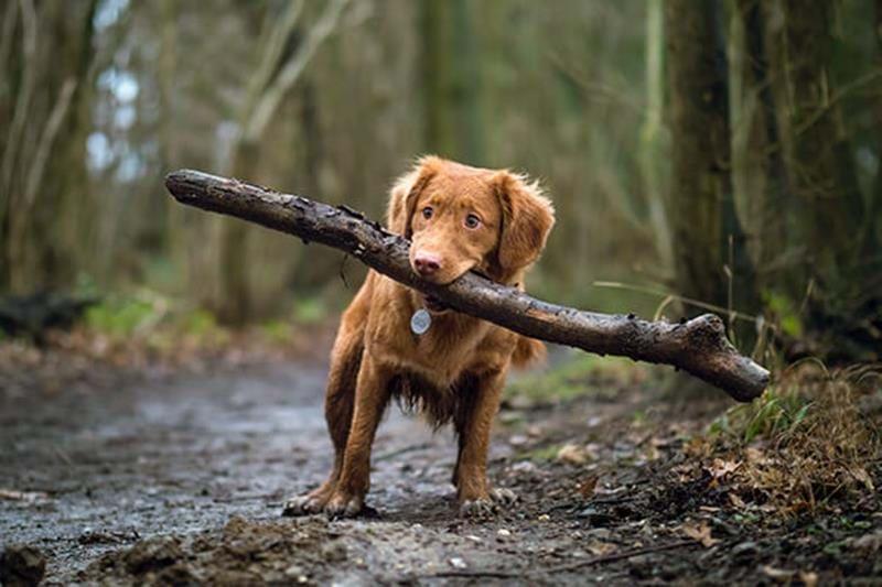 Spökålder hund – blir din hund plötsligt rädd för allt?