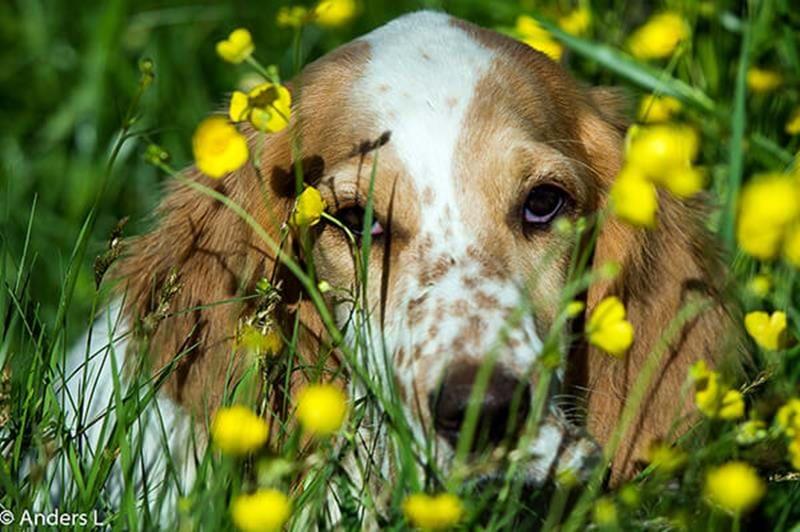 Algblomning hund – det här behöver du veta