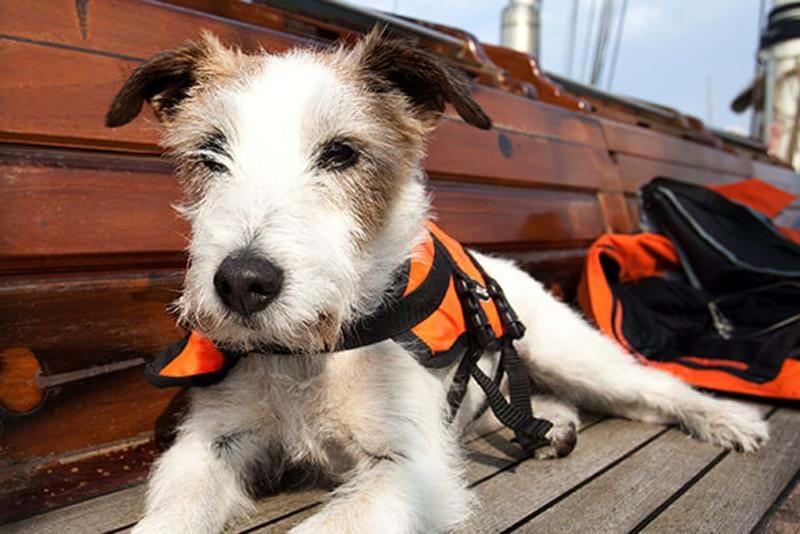 Hund på båt – 4 säkerhetstips