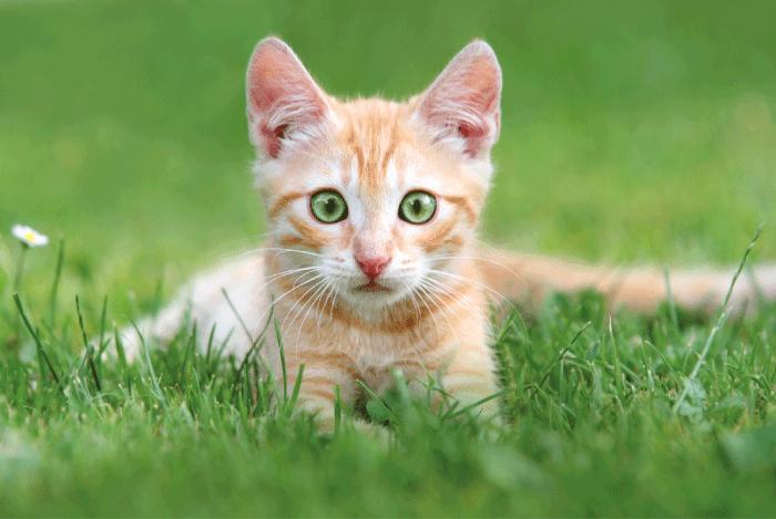 Gå med i kattungeresan, nyhetsbrevet för nyblivna kattungeägare