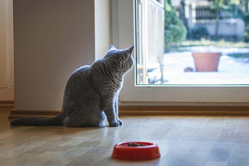 Katt som inte äter eller dricker?