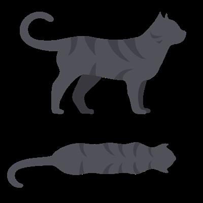 mat till mager katt