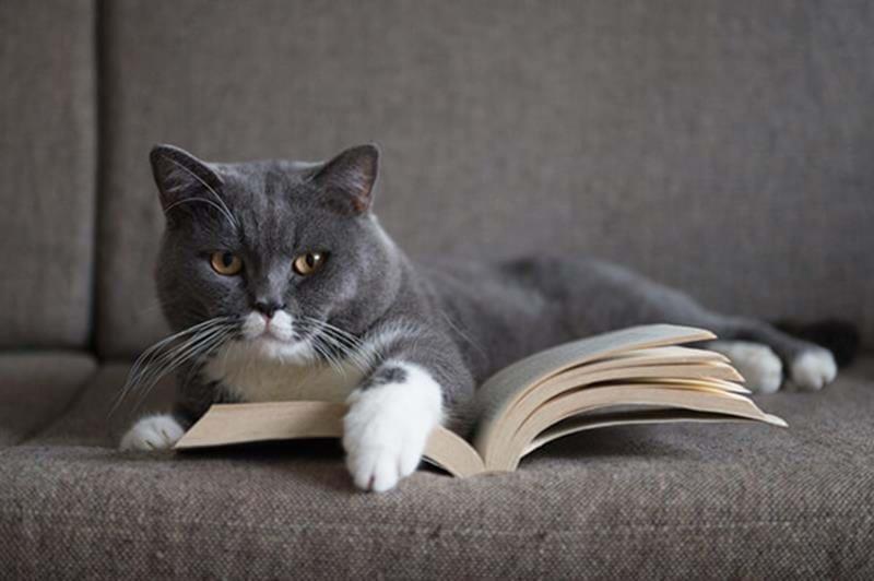 Kattens historia