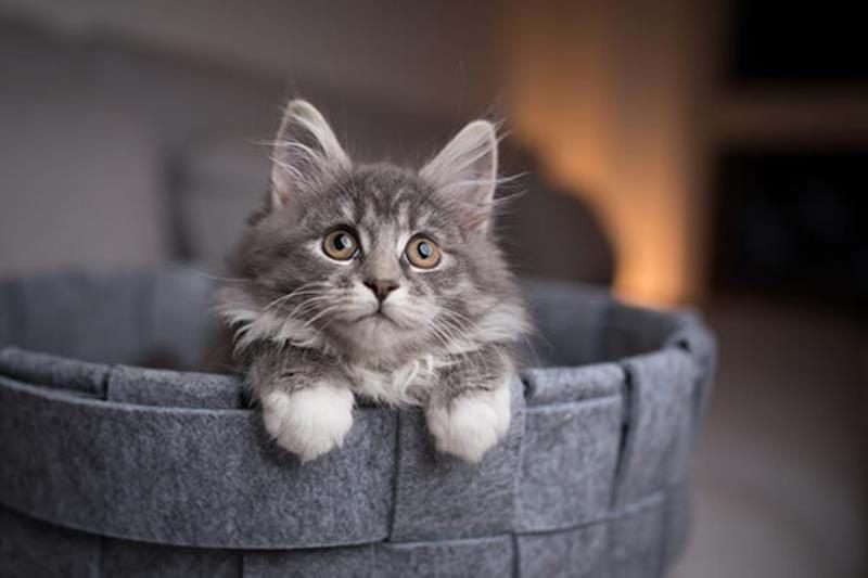 Hur får man en katt rumsren?