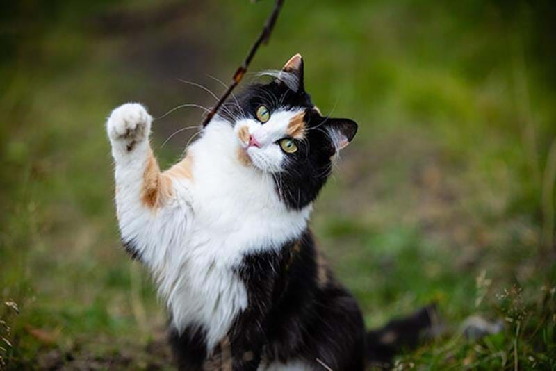Vaccinera din katt