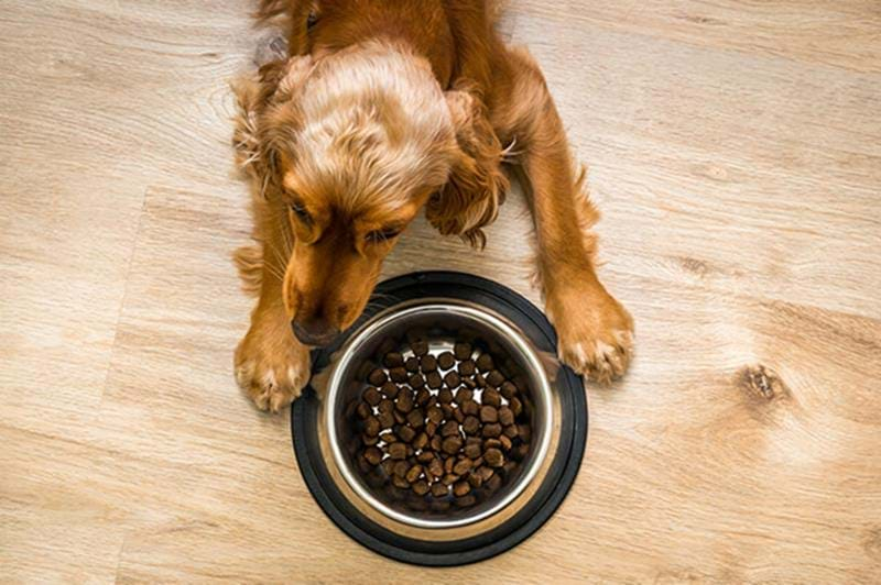 Switching from puppy food to adult food