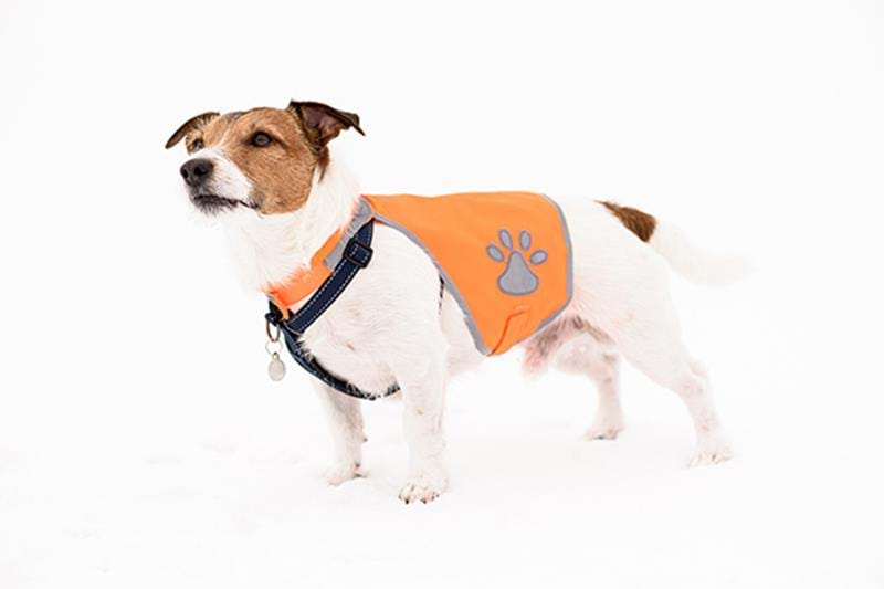 Dog reflector – simple life insurance
