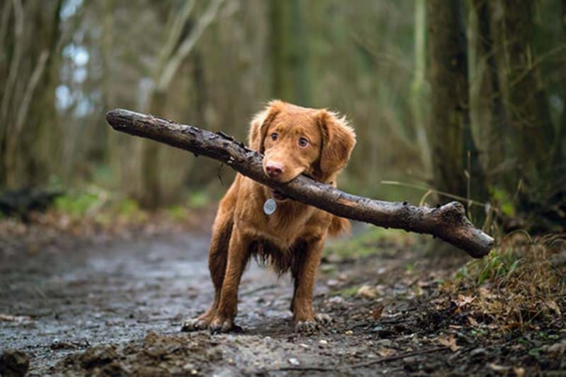 Your dog's adolescence – tips for your dog's teenage years