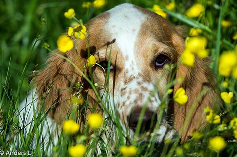 Vaccinating dogs and puppies