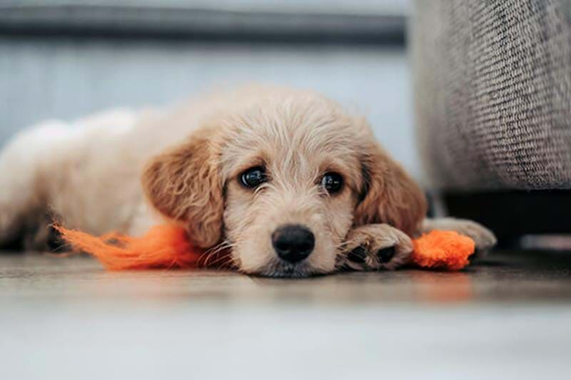 Independence training for puppies – teach your dog to be on its own