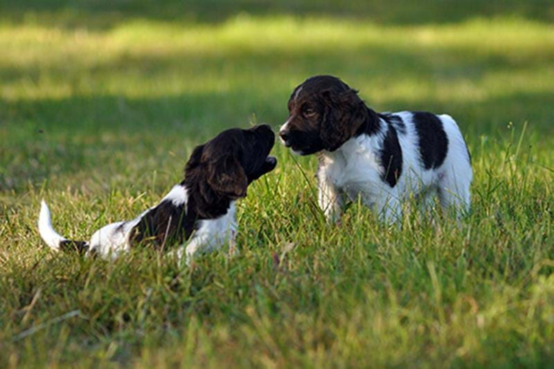 Socialise your puppy – train your dog to acclimatise to different environments