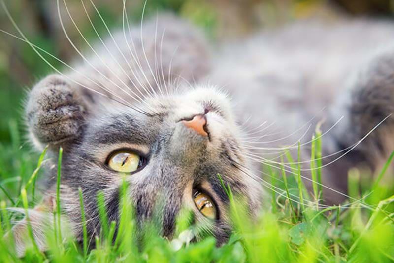 Cat behaviour and body language